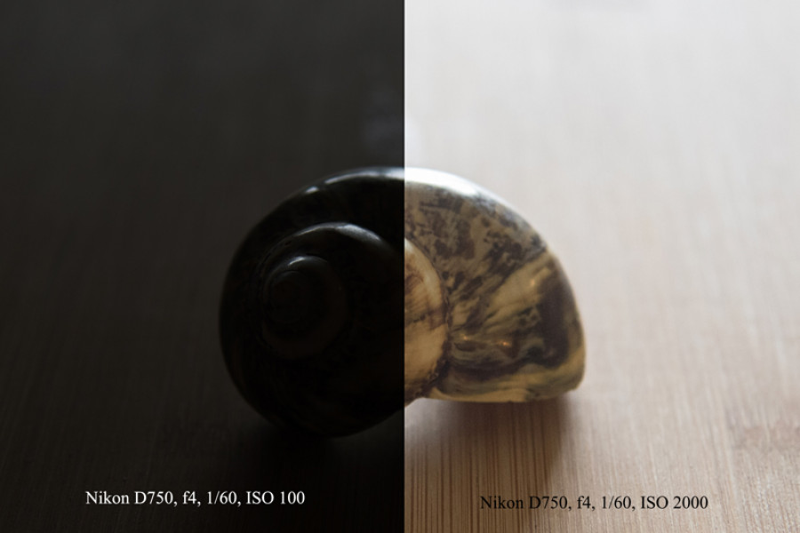 Photo of sea shell, ISO 100 vs ISO 2000, photography for beginners