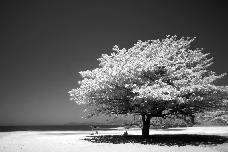 Big Tree black and white photo, rule of third
